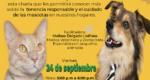 Charla Cuidado de Mascotas-Redes-02
